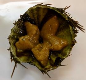 サンショウウニの下処理とウニ丼