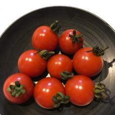 しわしわのミニトマト復活!