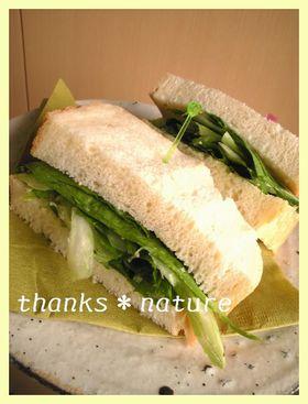 爽やかセロリのサンドイッチ