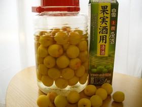 梅講師直伝⑤ 贅沢❤日本酒で梅酒