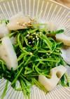 蓮根と豆苗サラダ