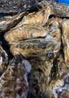【基本】生牡蠣の捌き方(殻剥き)