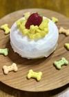 犬用お誕生日ケーキ♡