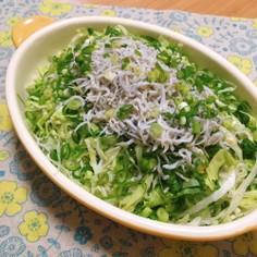 レタスとしらすの和風サラダ