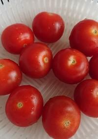 プチトマトの保存法