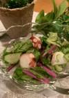 カンタン赤水菜ときゅうりとタコの酢の物