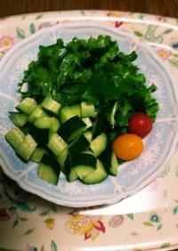 家庭菜園リーフレタス胡瓜ミニトマト☺⛄☕