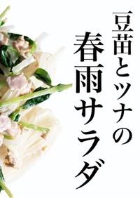 豆苗とツナの春雨サラダ