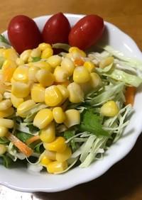 水菜とキャベツ、5種の毎日サラダ