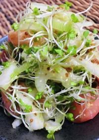 トマトセロリブロッコリースプラウトサラダ