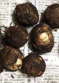 長持ちのコツ☆気温別 里芋の保存方法