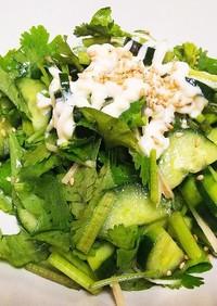 パクチーと新生姜のサラダ
