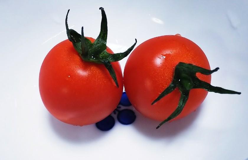 プチトマトのガクの再生方法