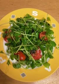 豆苗とプチトマトのサラダ