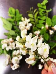 アカシア花酒の写真
