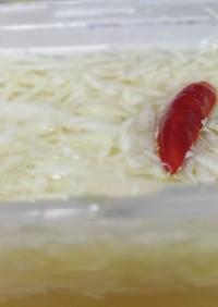 すし酢と千切りキャベツのかんたんピクルス