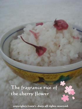 桜の香ふんわりごはん