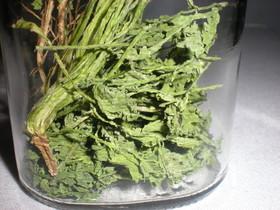 超エコな作り方①乾燥香菜・コリアンダー