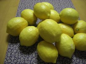 レモンバタージャム (レモンカード)