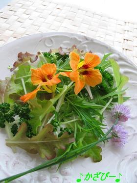 食べるアート♪フラワーハーブサラダ