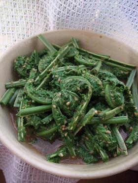 山菜シリーズ こごみの胡麻和え