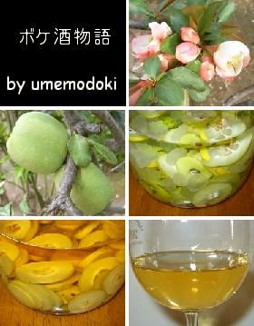 ★木瓜(ボケ)酒