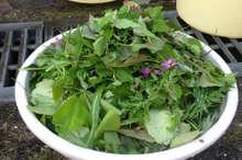 酵素 作り方 野草 の