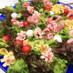 食べられる花束!ブーケサラダ