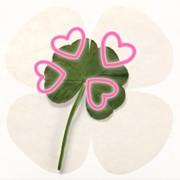 momoの花