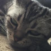 猫太朗さん