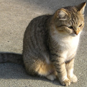 narniancat