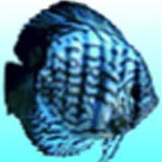BlueDiscus