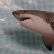 クックサメ田氏