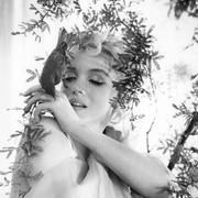 Marilyn☆M