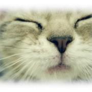 みるきー猫ちゃん