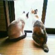 保護猫母さん