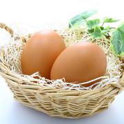 フレッシュ卵卵