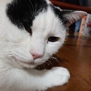 ネコみーさん