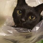 黒猫凛太ぱぱ