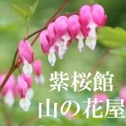 山菜レシピ集★紫桜館