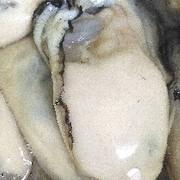 浜野水産(広島牡蠣)