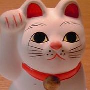 shiro猫