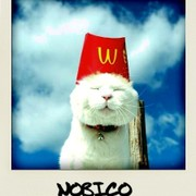 nobico2007