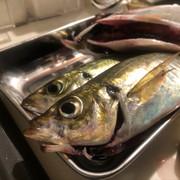 魚肴魚ちゃん