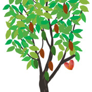 cacaotreee