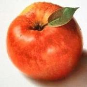 apple*tree