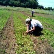 無農薬野菜もうり農園