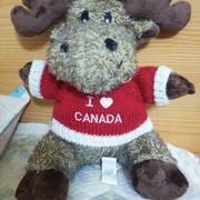 Moose2021
