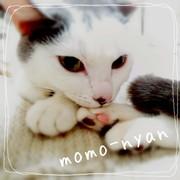 黒猫Momoにゃん