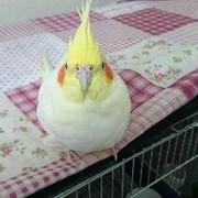 可愛い小鳥たち
